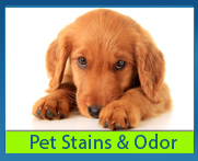 pet stain and odor removalcarpet cleaning service long beach