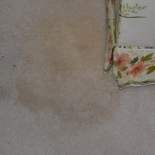 Before-Pet Stains?
