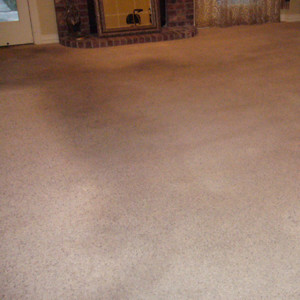 carpet cleaning service long beach dry carpet cleaning - carpet cleaning - dry organic carpet cleaning power before